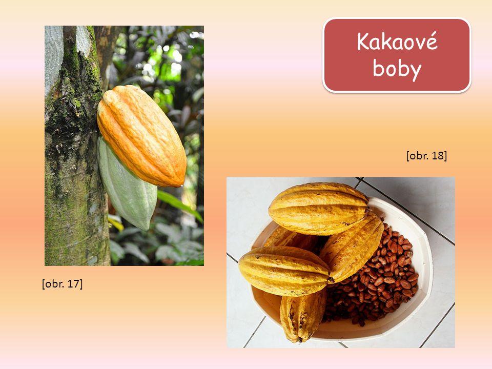 Kakaové boby [obr. 18] [obr. 17]